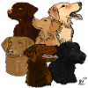 6 Retriever Breeds